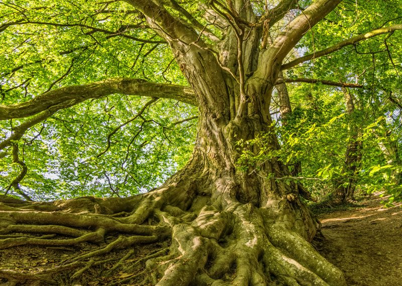 No tree can grow tall without healthy, strong roots. Just like a tree, your business can't grow and be successful without strong foundations and decluttered finances. www.connygraf.com